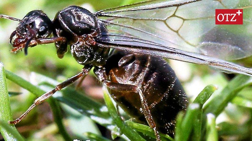 Wie Bekämpft Man Ameisen