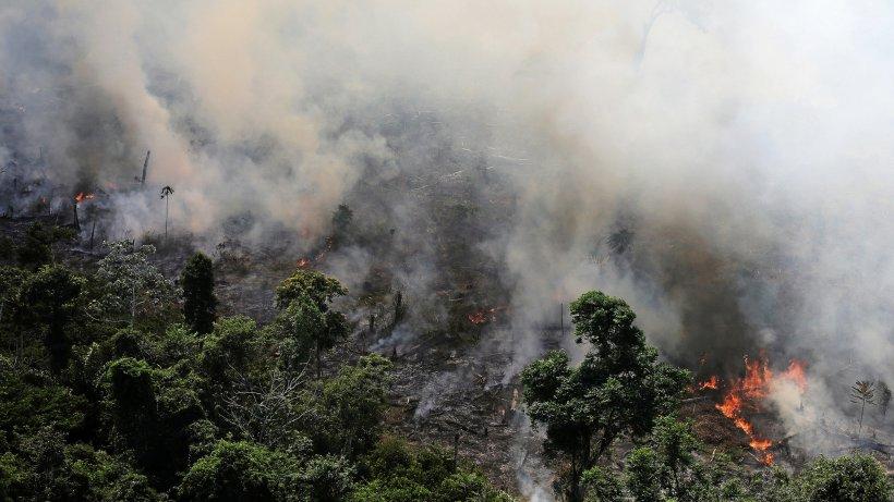 Amazonas-Regenwald brennt: Fotos zeigen Ausmaß des